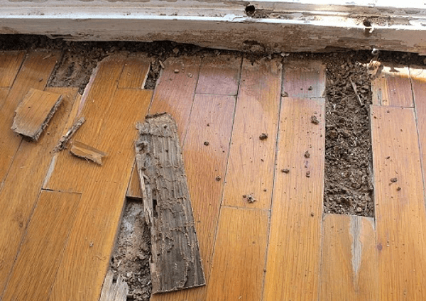 Loại gỗ chống mối mọt tốt nhất hiện nay